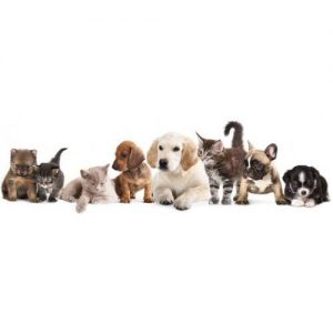 Животни и домашни любимци